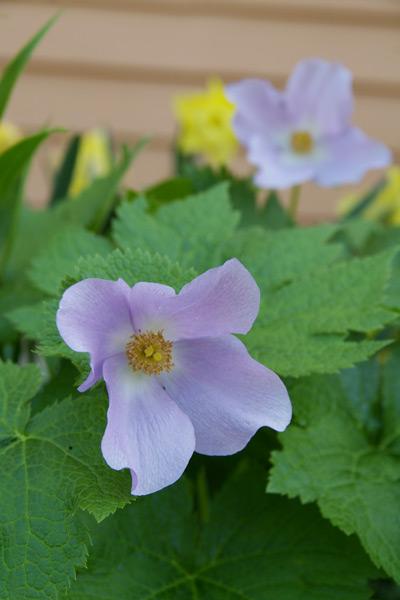 gardening3_201406020159389c2.jpg