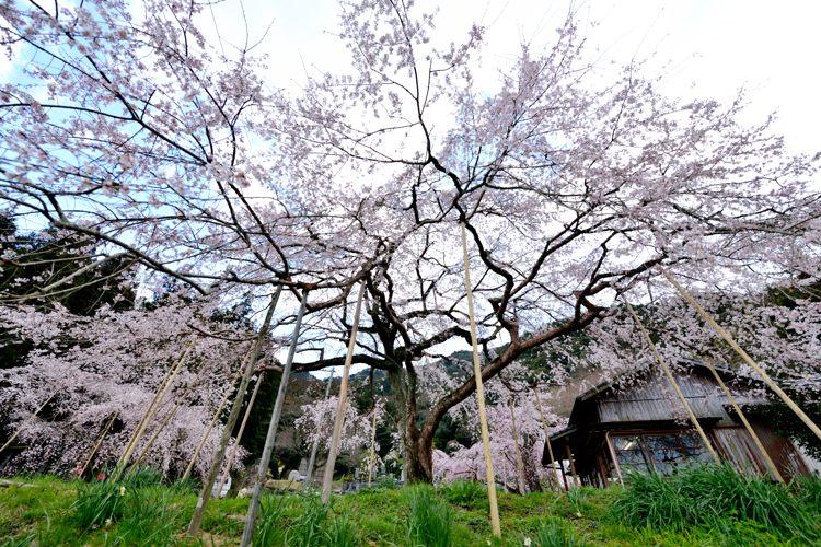 2014-03-21_5086-750.jpg