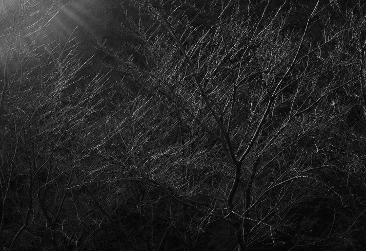 2014-03-22_5135-750.jpg