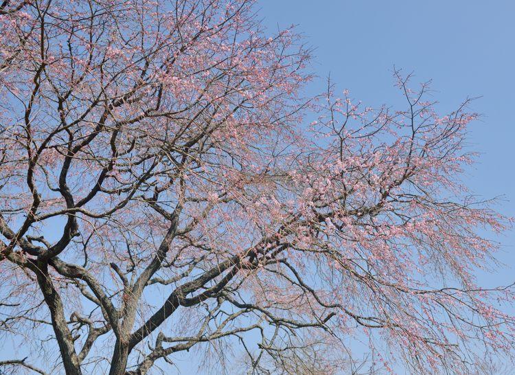 2014-03-28_5310-750.jpg