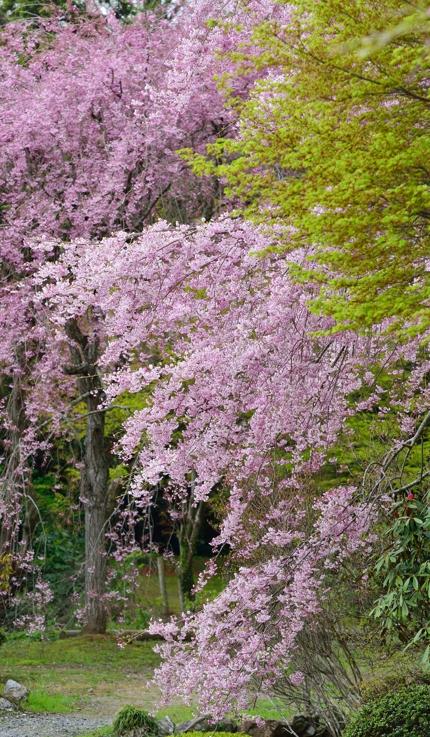 2014-04-11_6210-430.jpg