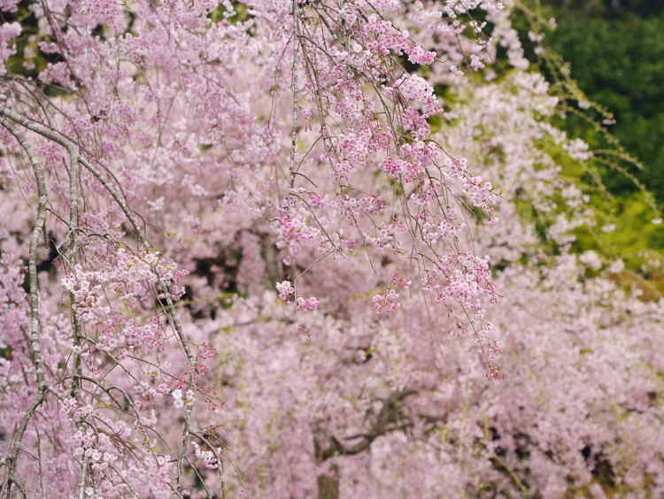 2014-04-11_6253-750.jpg
