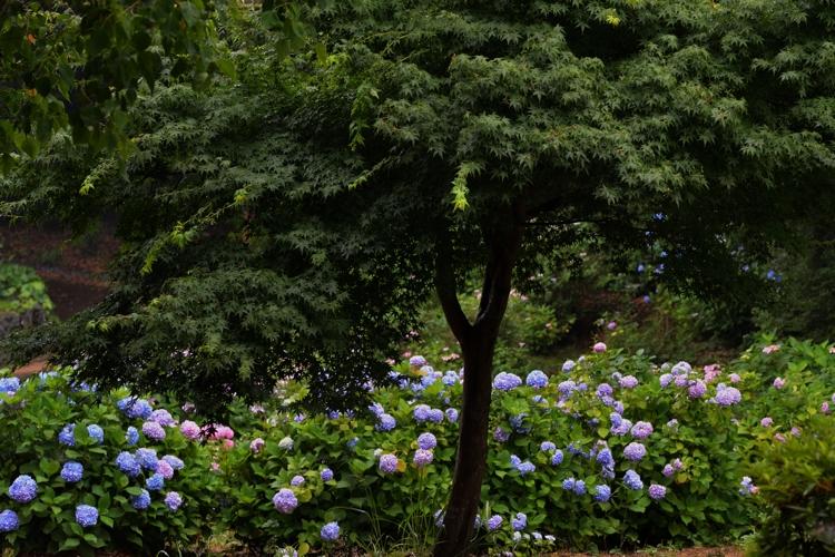 2014-06-17_1525-3-750.jpg
