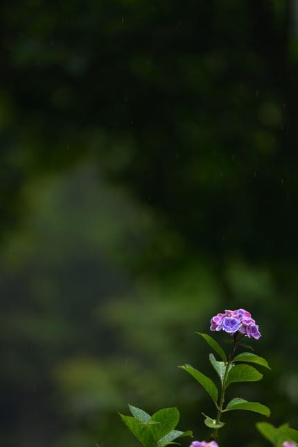 2014-06-17_1555-430.jpg