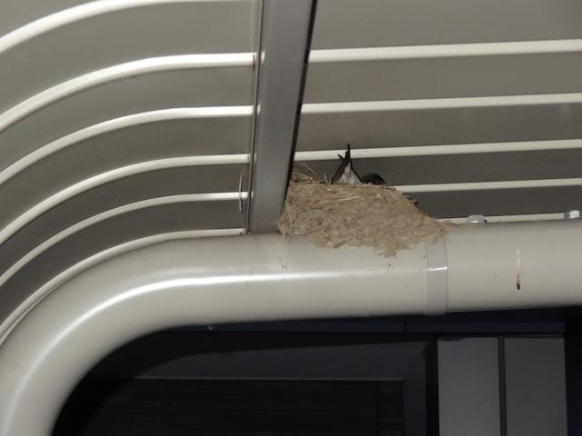 ツバメの巣2