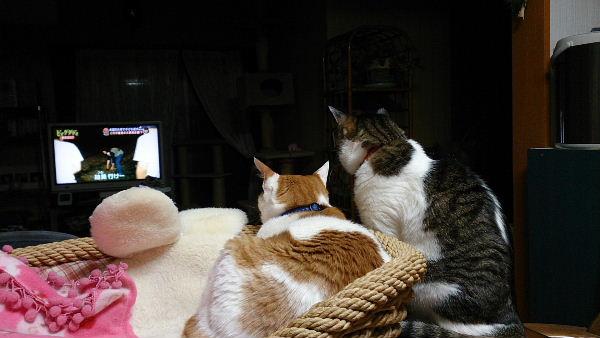 テレビ観賞