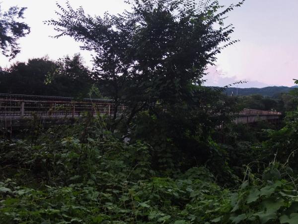 DSCF5469 (600x450)