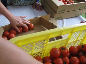 トマト講習2