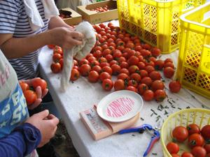トマト講習1