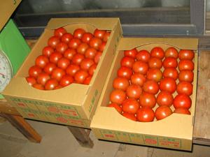 トマト講習3