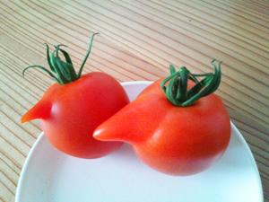 変わりトマト5