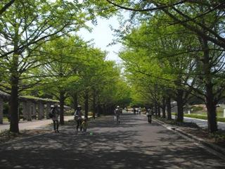 公園の緑がきれい