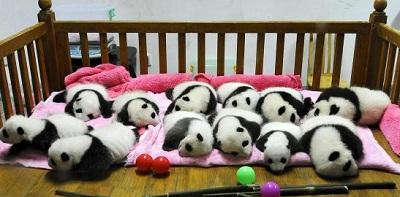並ぶパンダ