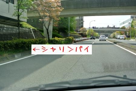 sDSC_4406.jpg