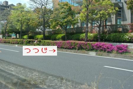 sDSC_4425.jpg
