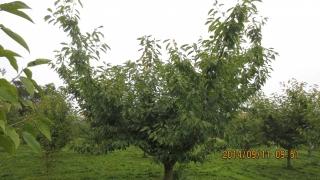 5シンボルツリー