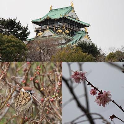 大阪城梅林