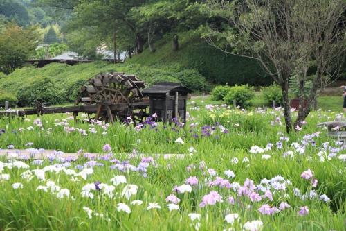 永沢寺花しょうぶ園