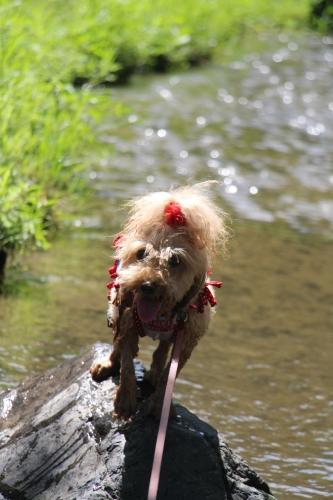 鶴見緑地水遊び