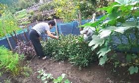 我が家の農園