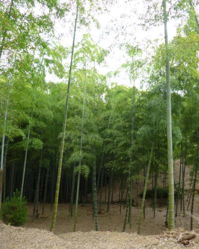 140615竹林公園1