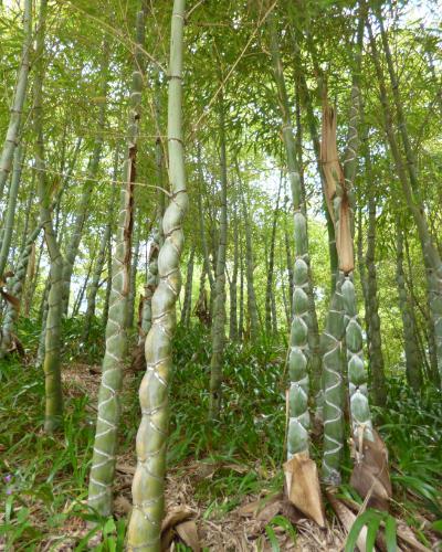 140615竹林公園2