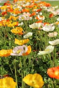 fleures.jpg