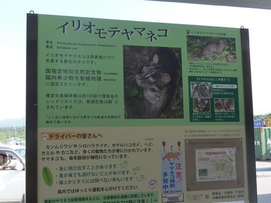 イリオモテヤマネコ看板 (1)