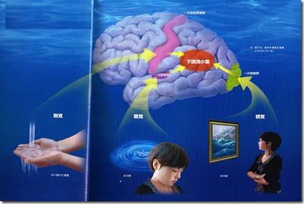 聴くことと脳