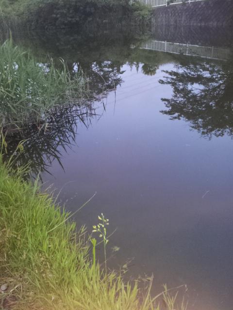 Chokj池の一部