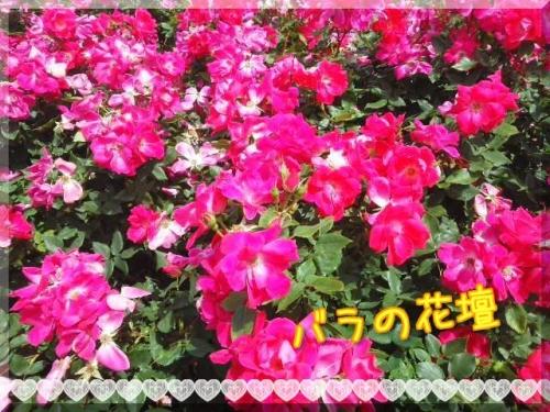 JJiJw4nVEoVbeJt1400748767_1400748892.jpg