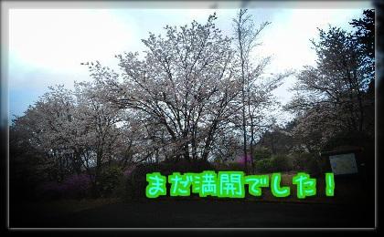 SgfdFqO_YS5SPPx1398068244_1398068518.jpg