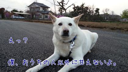 2014-04-11-2.jpg