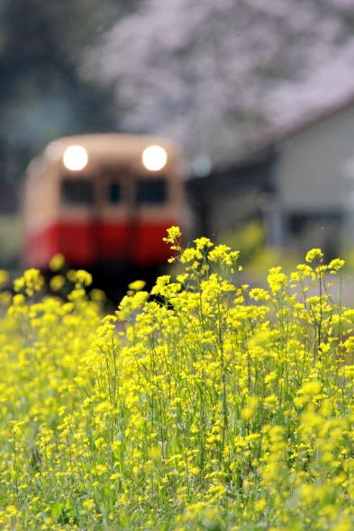 2010年4月上旬 小湊鉄道 月崎