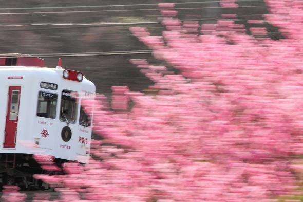 2012年3月上旬 和歌山電鐵貴志川線 山東~大池遊園