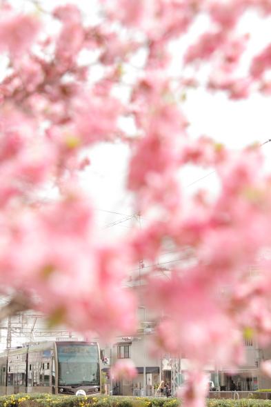 2014/3/29 阪堺電軌阪堺線 綾ノ町