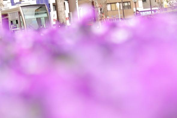2014/3/29 阪堺電軌阪堺線 花田口