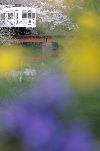 2014/4/5 和歌山電鐵貴志川線 大池遊園