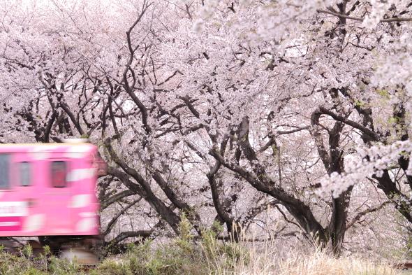 2014/4/6 樽見鉄道 横屋~十九条