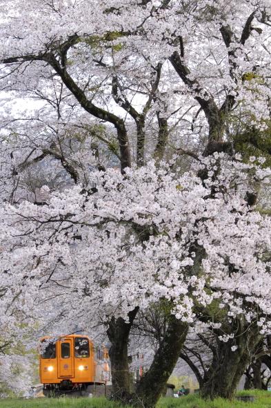 2014/4/6 樽見鉄道 谷汲口