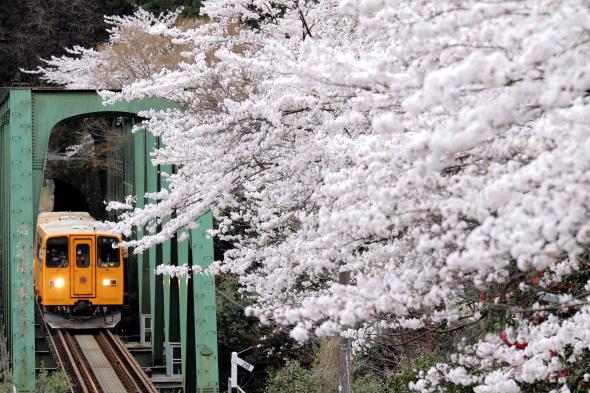 2014/4/6 樽見鉄道 日当