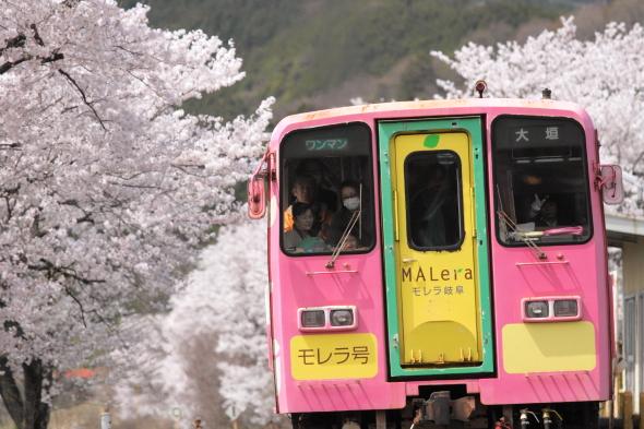2014/4/6 樽見鉄道 木知原