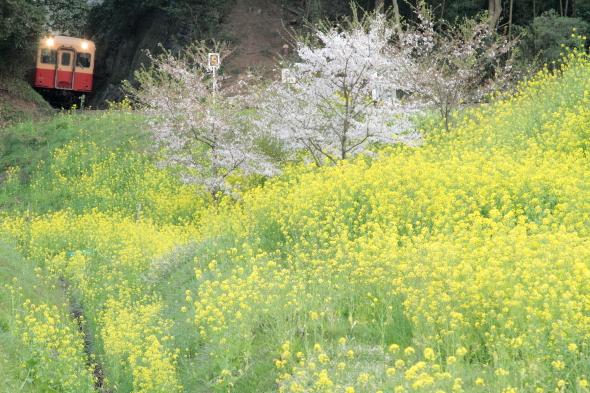 2014/4/10 小湊鉄道 飯給
