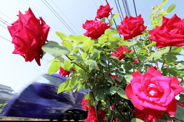 2014/5/10 南海本線 蛸地蔵