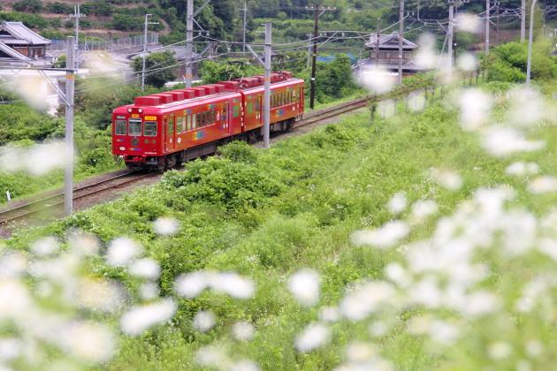 2008年6月 和歌山電鐵貴志川線 山東~大池遊園