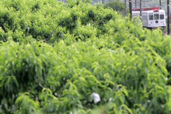 2014/6/7 和歌山電鐵貴志川線 大池遊園