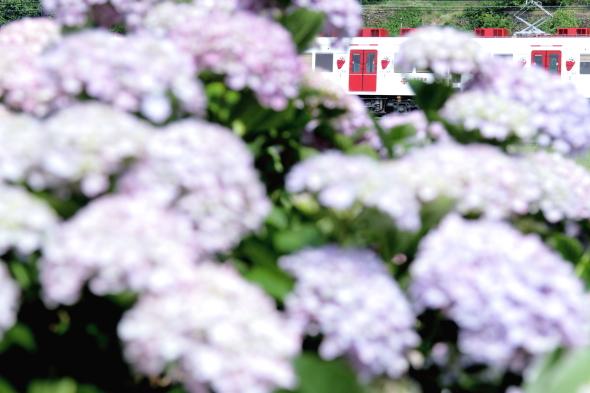 2014/6/14 和歌山電鐵貴志川線 吉礼~伊太祈曽