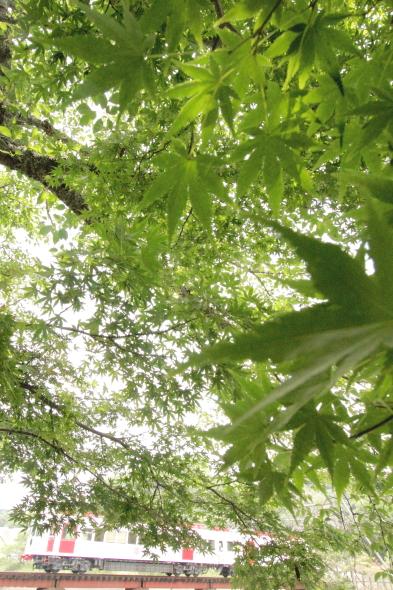 2014/6/14 和歌山電鐵貴志川線 大池遊園