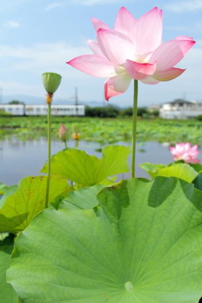 2014/7/12 和歌山電鐵貴志川線 甘露寺前