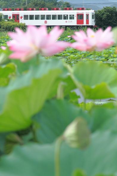 2014/7/20 和歌山電鐵貴志川線 甘露寺前
